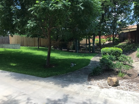 Lawn Care Gallery Fort Worth Tx Smith S Lawnage Incentives